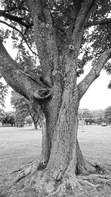 tree1_blog