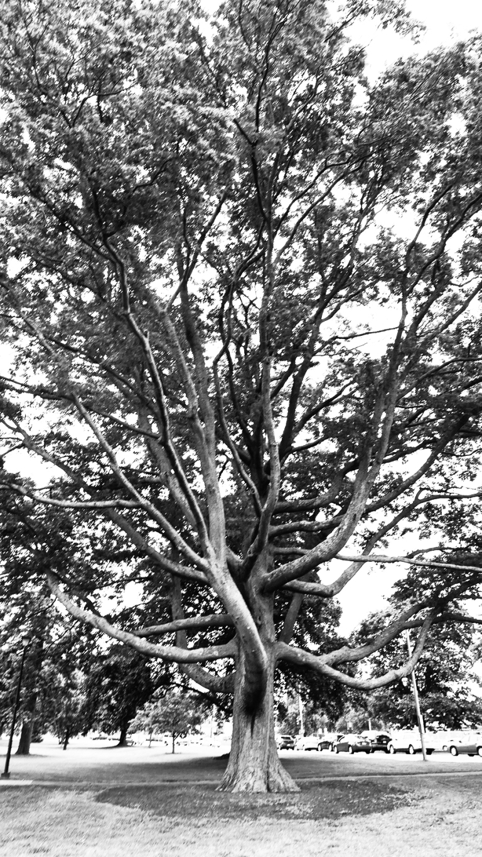 tree2BW_blog