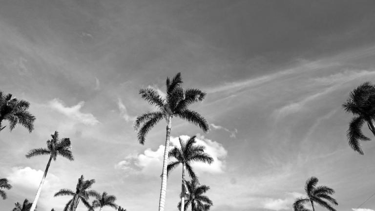 031_04_PB_ANS_palmtreesBW_BLOG